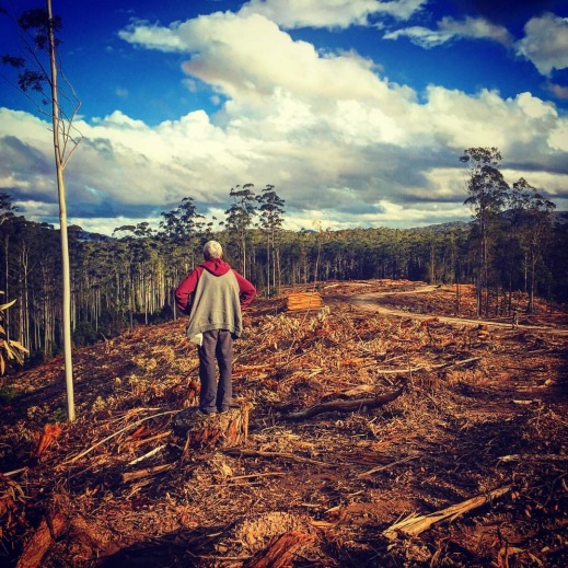 Nothing quite prepares you for the devastation of clear felling. Joby, a Gumbaynggirr elder, surveys the Tarkeeth