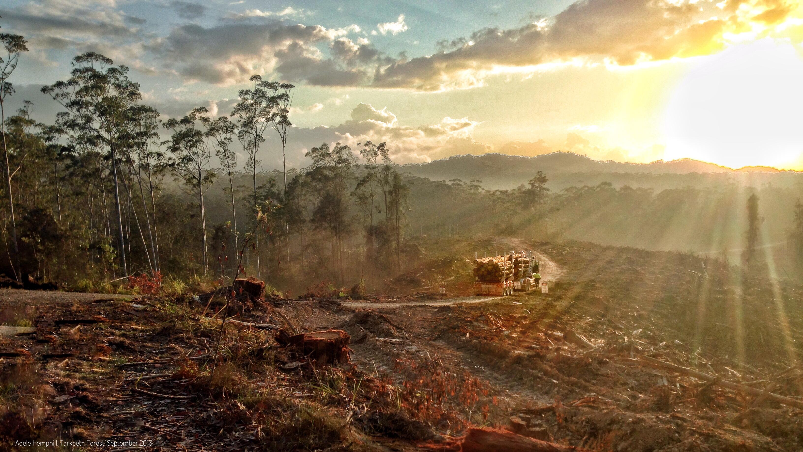 The Bonfire of the Insanities 2- the EU's Biomass Dilemma